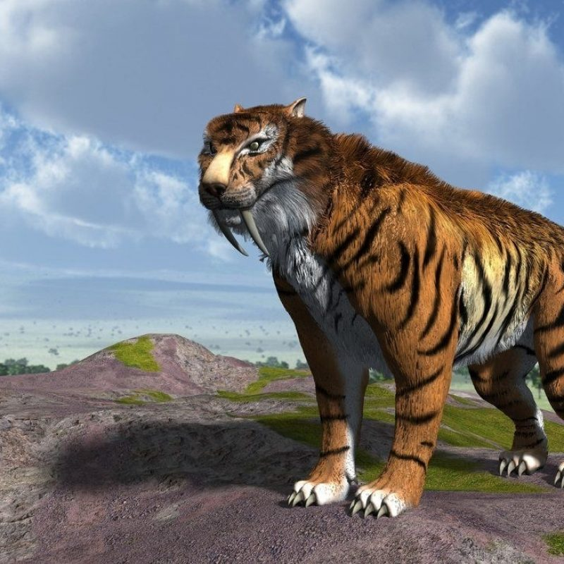 10 New Saber Tooth Tiger Wallpaper FULL HD 1080p For PC Background 2020 free download saber tooth tiger wallpapers wallpapers pinterest 800x800