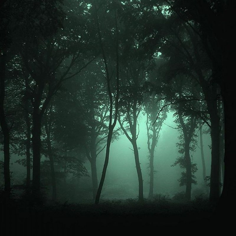 10 Top Dark Forest Wallpaper 1080P FULL HD 1920×1080 For PC Desktop 2018 free download scary fog desktop wallpapers wallpapers heavens pinterest 800x800