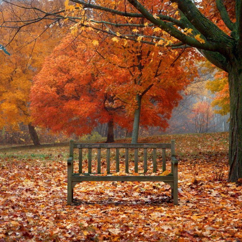 10 Latest Fall Scenes For Desktop Background FULL HD 1080p For PC Desktop 2021 free download scenes of autumn desktop wallpaper 800x800