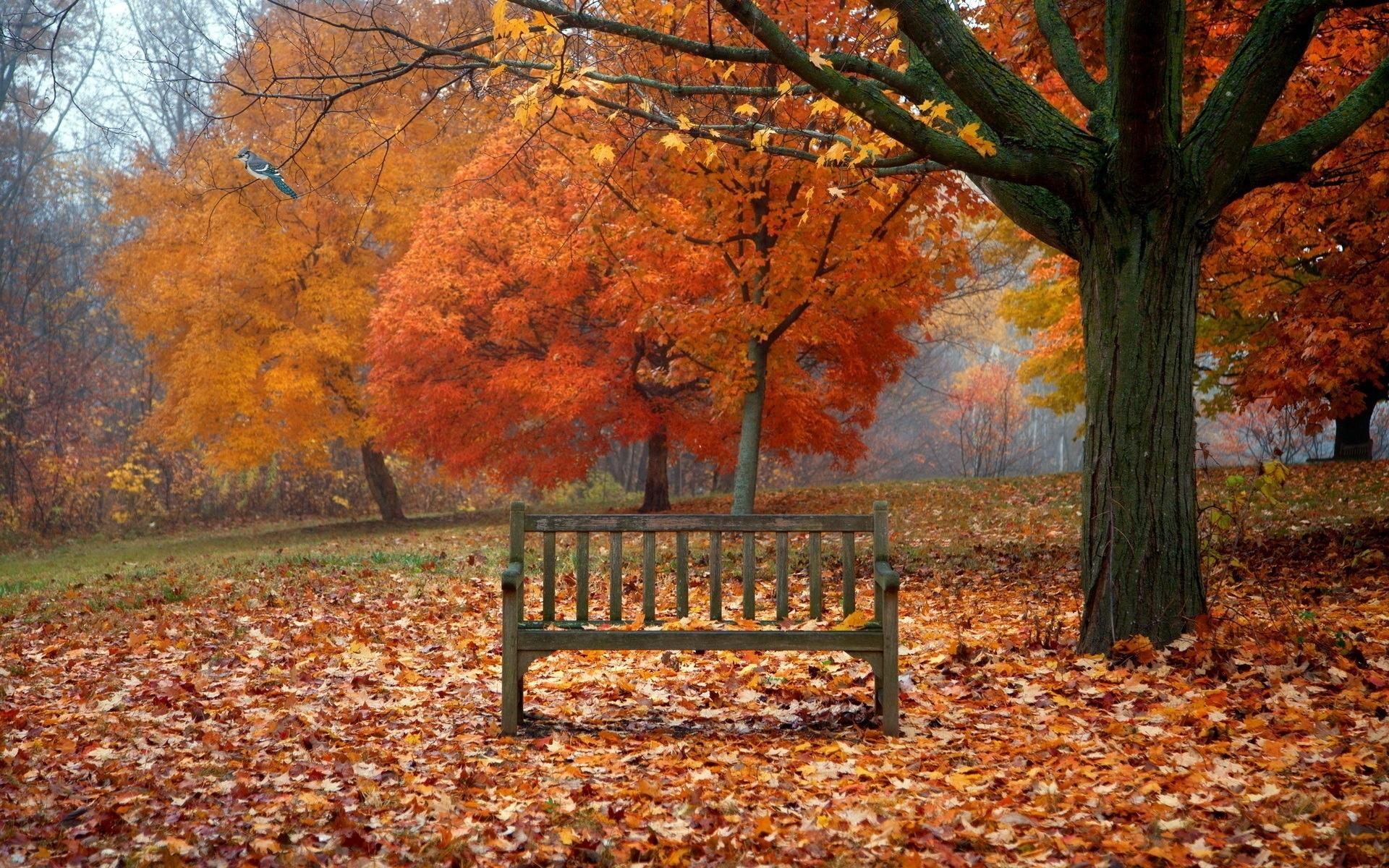 scenes of autumn - desktop wallpaper