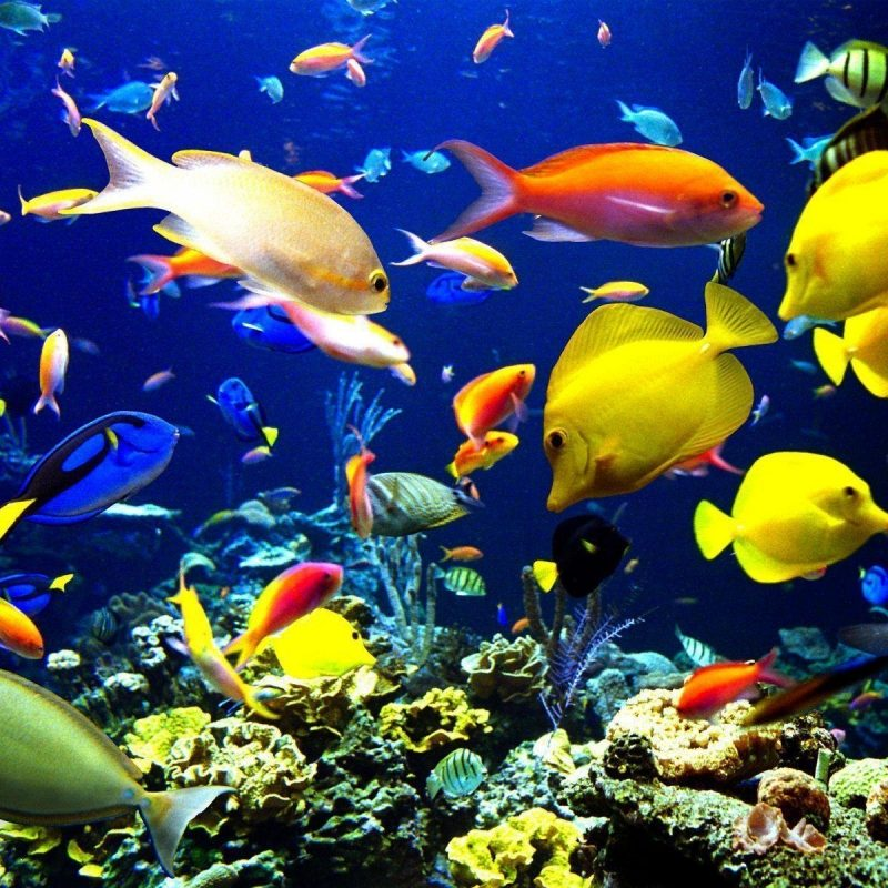 10 Top Sea Life Wallpaper Desktop FULL HD 1080p For PC Background 2020 free download sea creatures wallpapers wallpaper cave 800x800