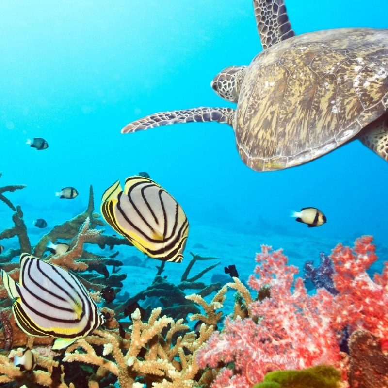 10 Latest Desktop Backgrounds Ocean Life FULL HD 1920×1080 For PC Background 2020 free download sea life wallpapers and background images stmed 800x800