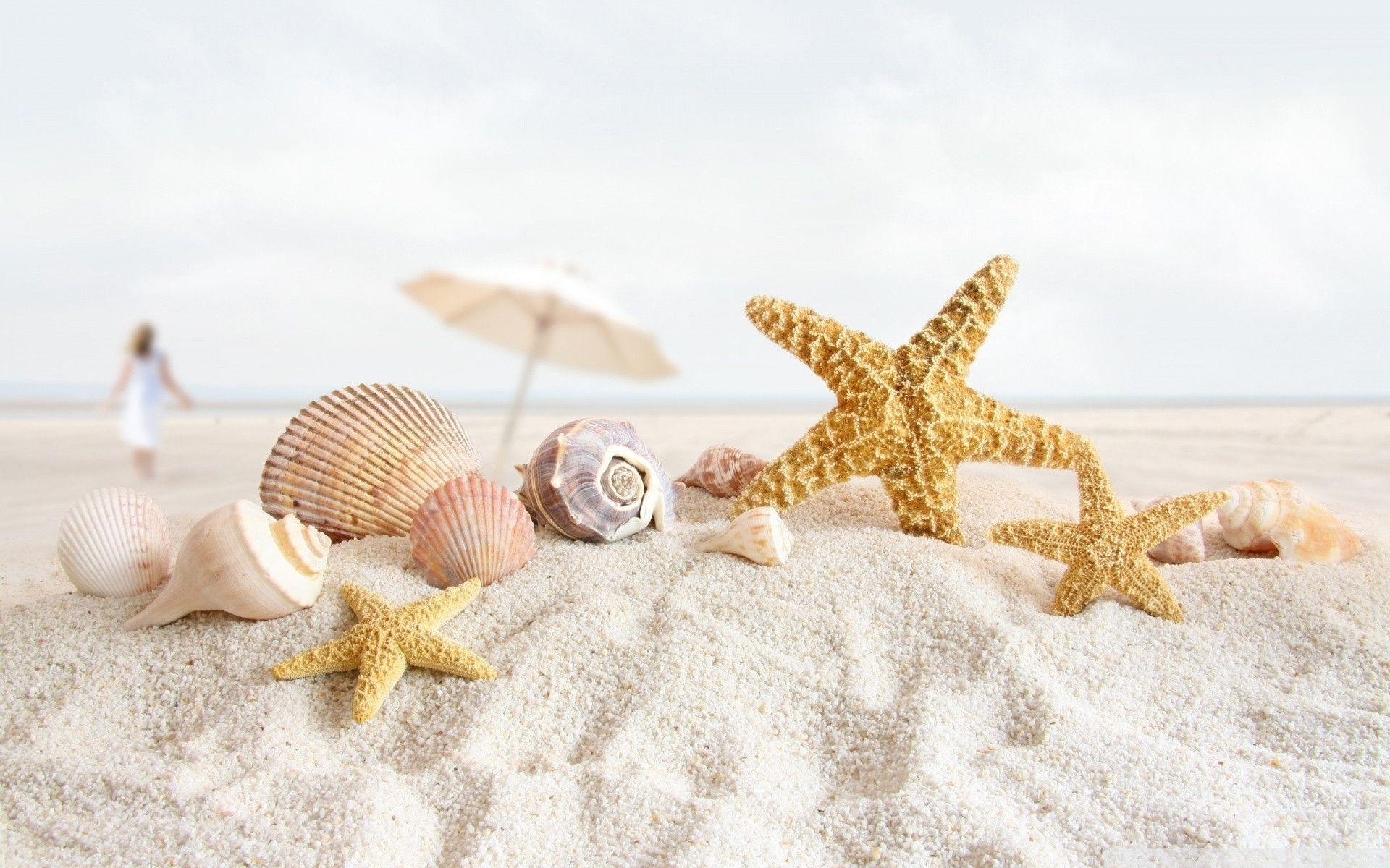 sea shell wallpapers - wallpaper cave