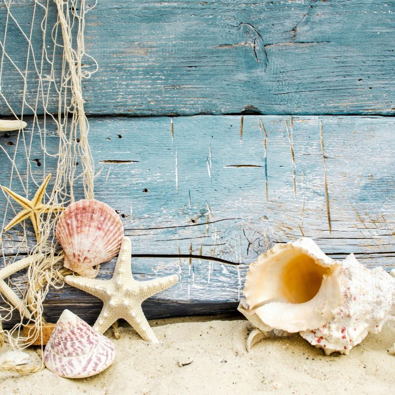 10 New Sea Shell Wall Paper FULL HD 1080p For PC Background 2021 free download sea shells wallpaper 52 images 800x800