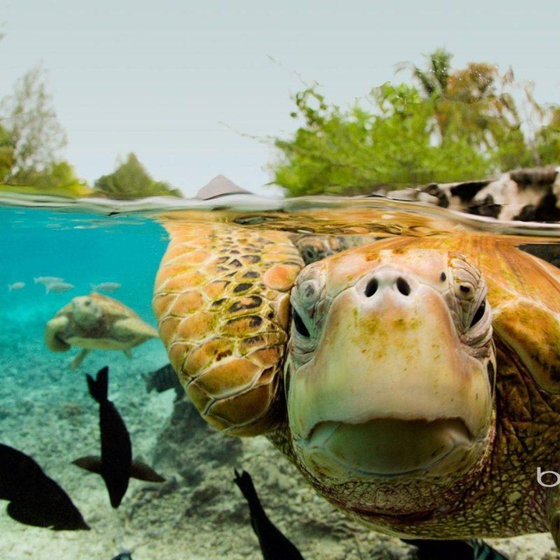 10 Best Sea Turtle Hd Wallpaper FULL HD 1080p For PC Background 2021 free download sea turtle hd wallpaper wallpaper hd wallpapers pinterest 800x800