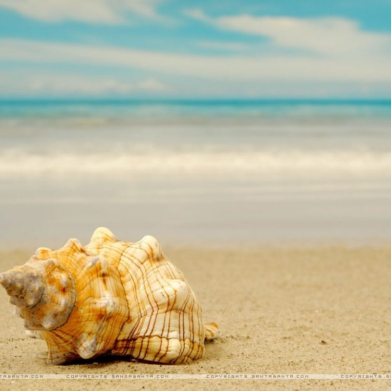 10 New Sea Shell Wall Paper FULL HD 1080p For PC Background 2021 free download seashells hd wallpaper beyond the sea pinterest 800x800