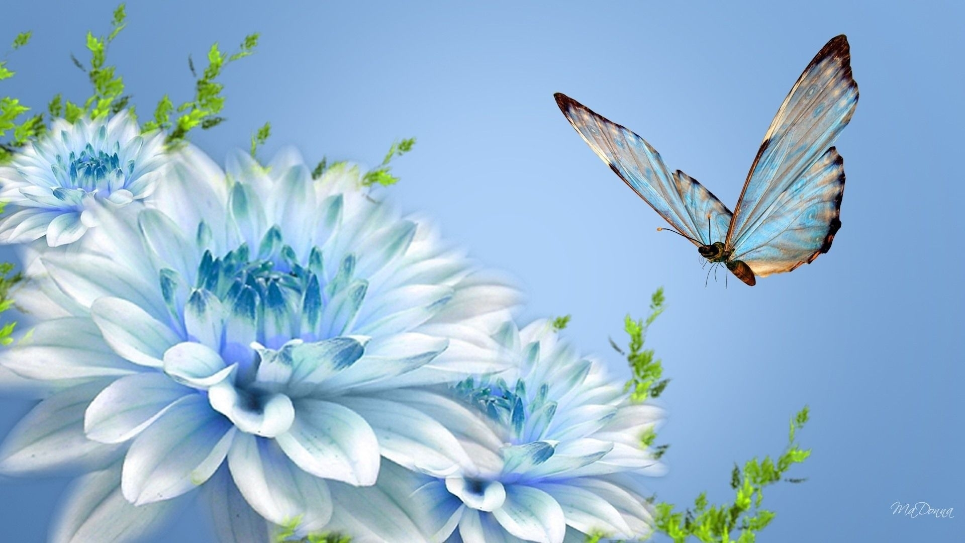 selection of the most beautiful butterfly wallpaper