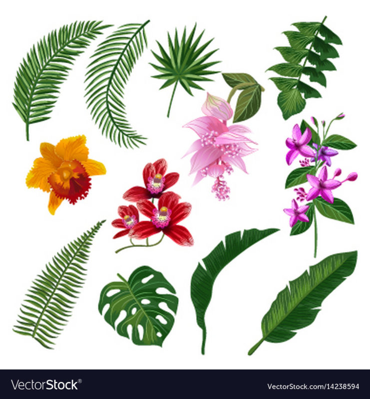 10 Latest Images Of Tropical Flowers FULL HD 1080p For PC Background 2021 free download set of tropical flowers bouquet royalty free vector image 741x800
