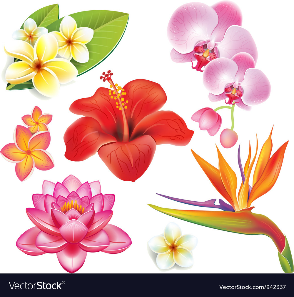 set of tropical flowers royalty free vector image