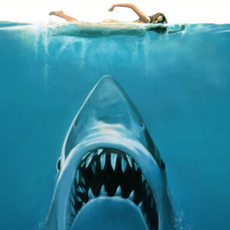 10 Most Popular Shark Wallpaper Hd 1920X1080 FULL HD 1920×1080 For PC Background 2020 free download shark attack painting e29da4 4k hd desktop wallpaper for 4k ultra hd tv 800x800