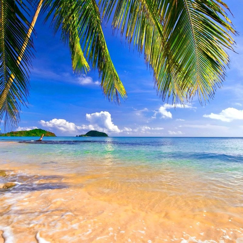10 Best Tropical Beach Hd Wallpaper FULL HD 1920×1080 For PC Background 2018 free download shore palms tropical beach e29da4 4k hd desktop wallpaper for 4k ultra 800x800
