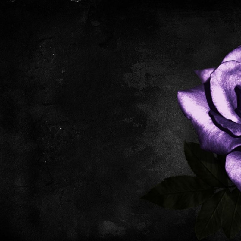 10 Most Popular Black And Purple Flower Wallpaper FULL HD 1080p For PC Background 2018 free download simple cool purple rose hd image http wallpapers ae simple cool 800x800