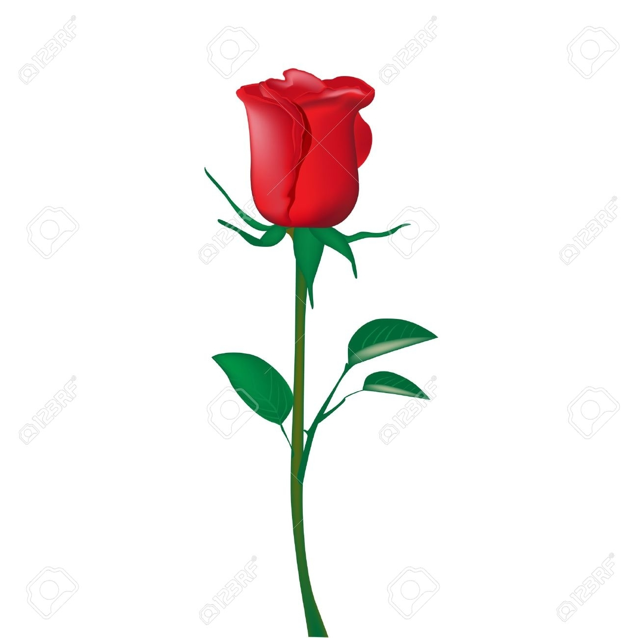 single red rose isolated on white royalty free cliparts, vectors