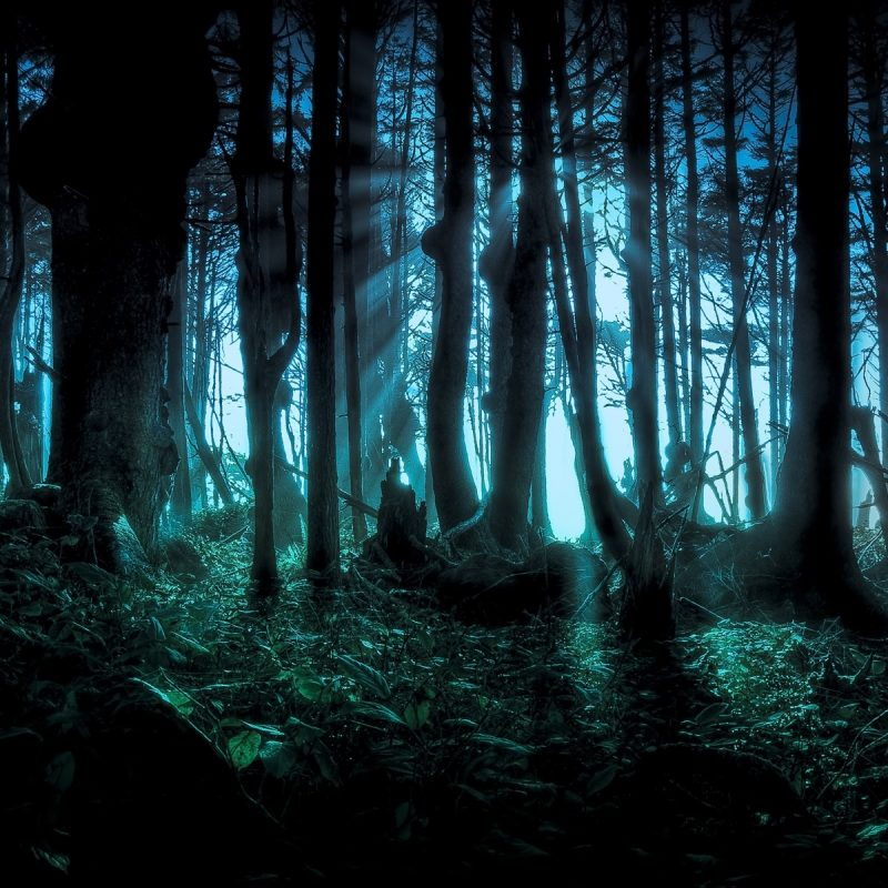 10 Top Dark Forest Hd Wallpaper FULL HD 1920×1080 For PC Desktop 2020 free download sinister forest full hd fond decran and arriere plan 1920x1200 800x800