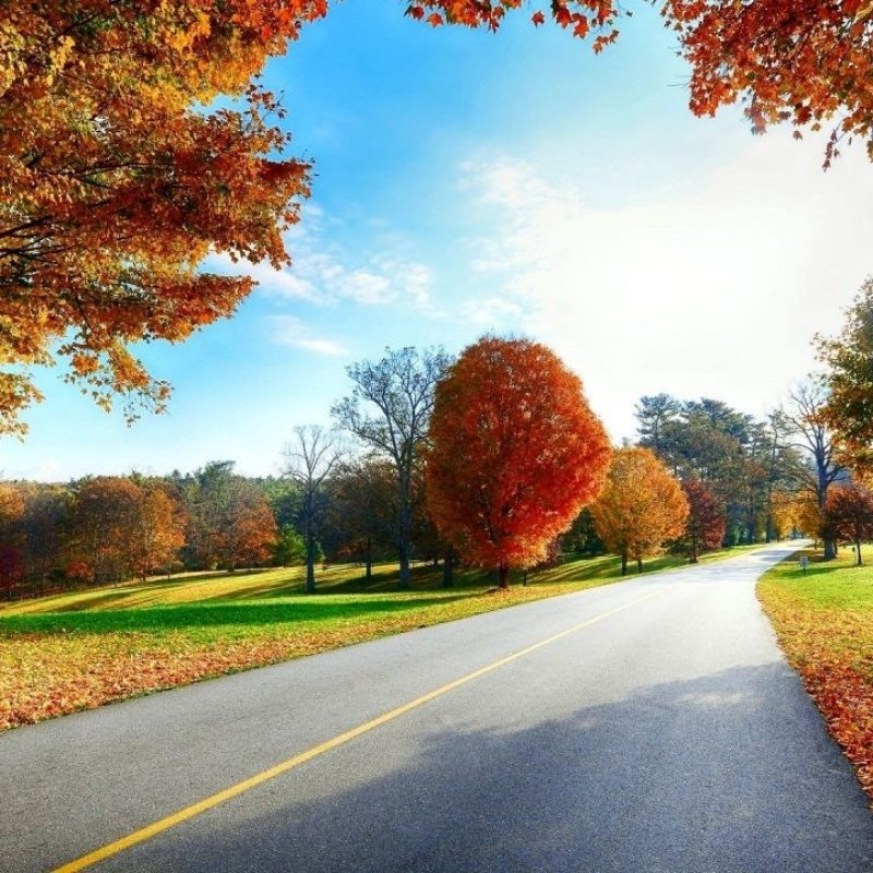10 Most Popular Hd Scenery Wallpapers 1080P FULL HD 1080p For PC Desktop 2021 free download site scene beautiful autumn road scenery wallpapers hd 1080p 800x800