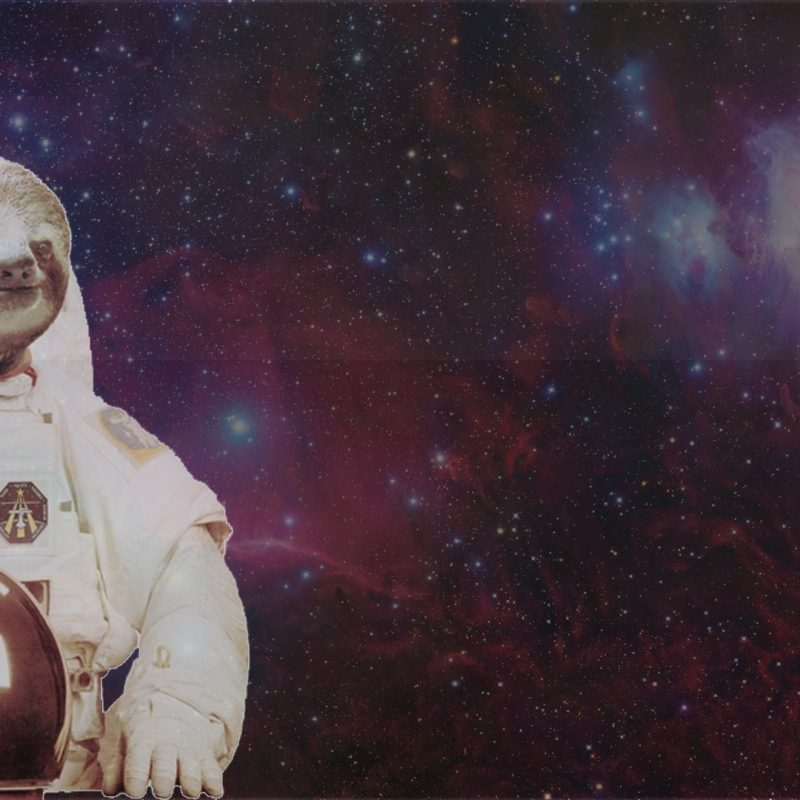 10 Latest Sloth Astronaut Wallpaper FULL HD 1080p For PC Background 2020 free download sloth desktop wallpaper ololoshenka pinterest sloth 800x800