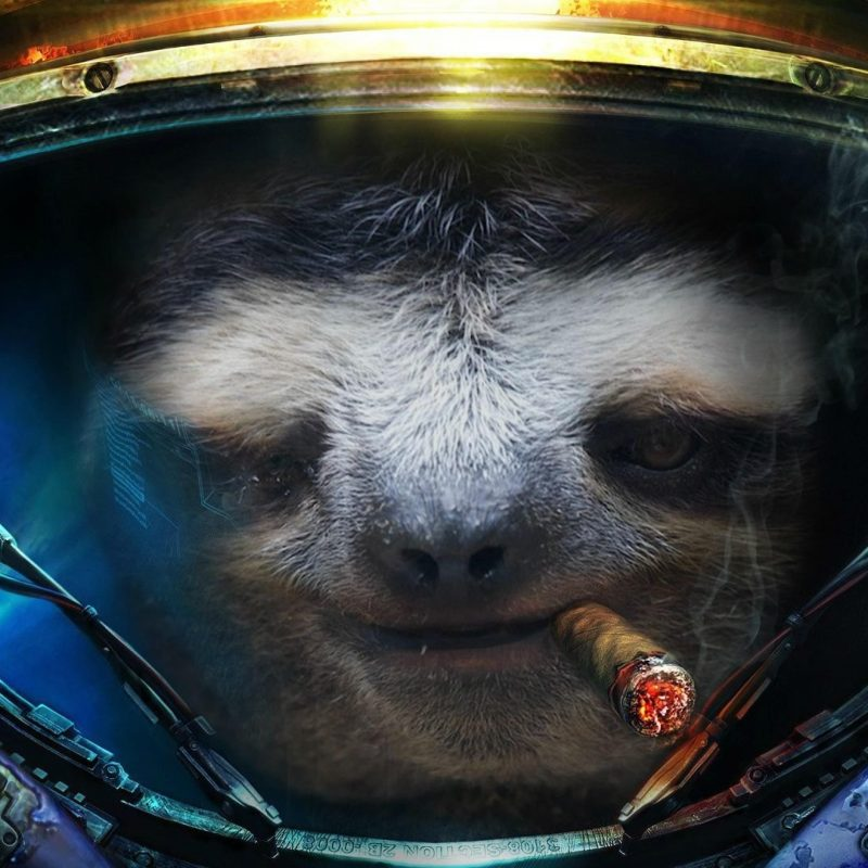 10 Latest Sloth Astronaut Wallpaper FULL HD 1080p For PC Background 2020 free download sloth wallpapers dawn pinterest sloth and wallpaper 800x800