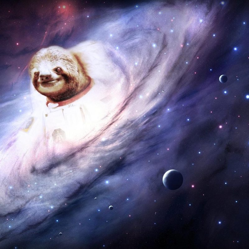 10 Latest Sloth Astronaut Wallpaper FULL HD 1080p For PC Background 2020 free download sloth wallpapers wallpaper cave 800x800
