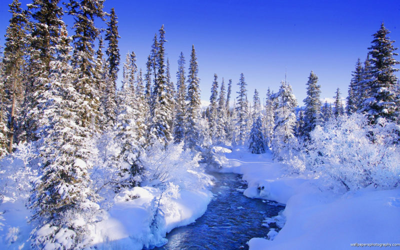 10 Most Popular Snowy Winter Scene Wallpaper FULL HD 1920×1080 For PC Desktop 2021 free download snow scenery wallpaper sf wallpaper 800x500