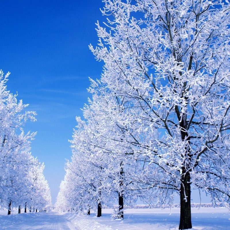 10 New Winter Scenes For Desktop Backgrounds FULL HD 1080p For PC Background 2020 free download snow scenes desktop background wonderland dreamy snow 1920x1080 800x800