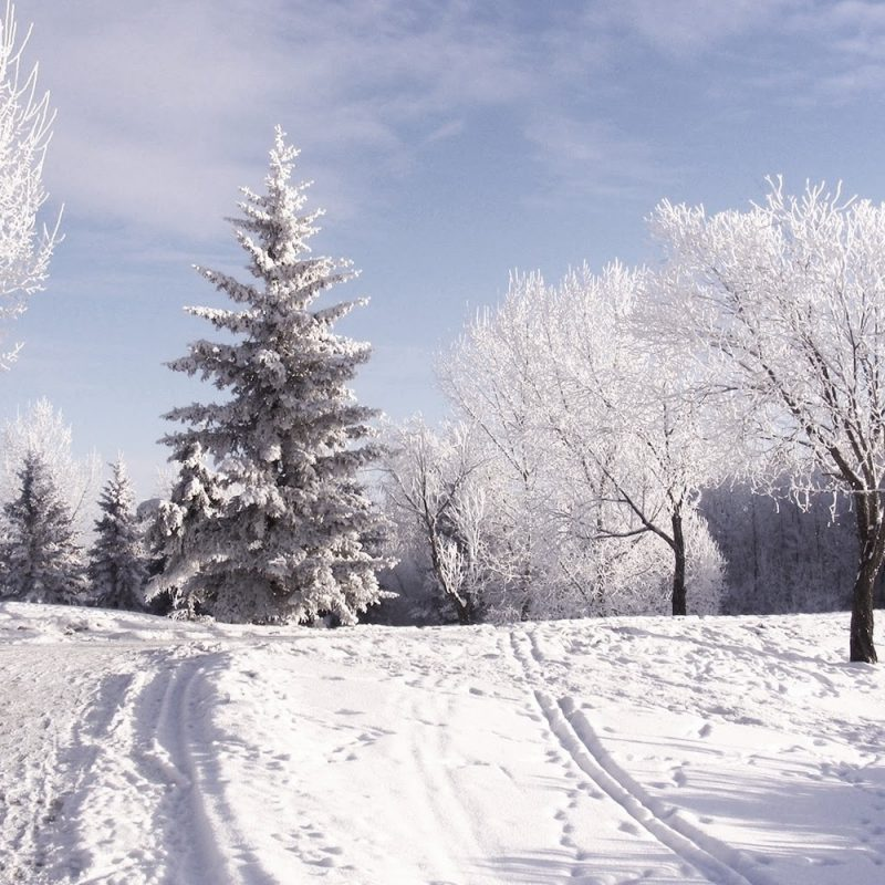 10 New Snow Desktop Wallpaper Hd FULL HD 1080p For PC Desktop 2021 free download snowing wallpaper gzsihai 800x800