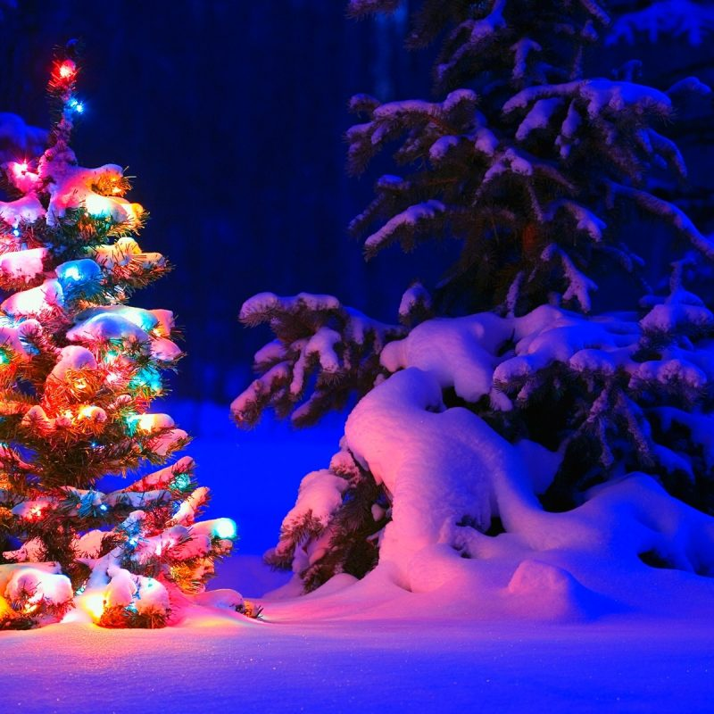 10 Most Popular Christmas Tree Snow Wallpaper Hd FULL HD 1080p For PC Desktop 2020 free download snowy christmas tree lights wallpapers hd wallpapers id 17824 1 800x800