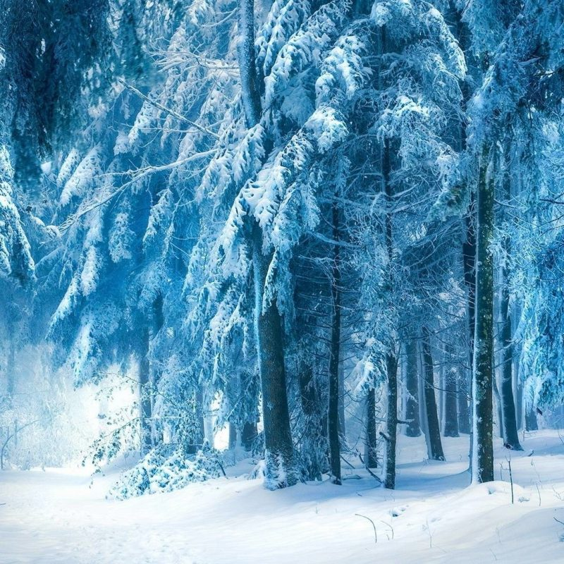 10 Best Snowy Dark Forest Wallpaper FULL HD 1080p For PC Background 2018 free download snowy dark forest wallpaper c2b7e291a0 800x800