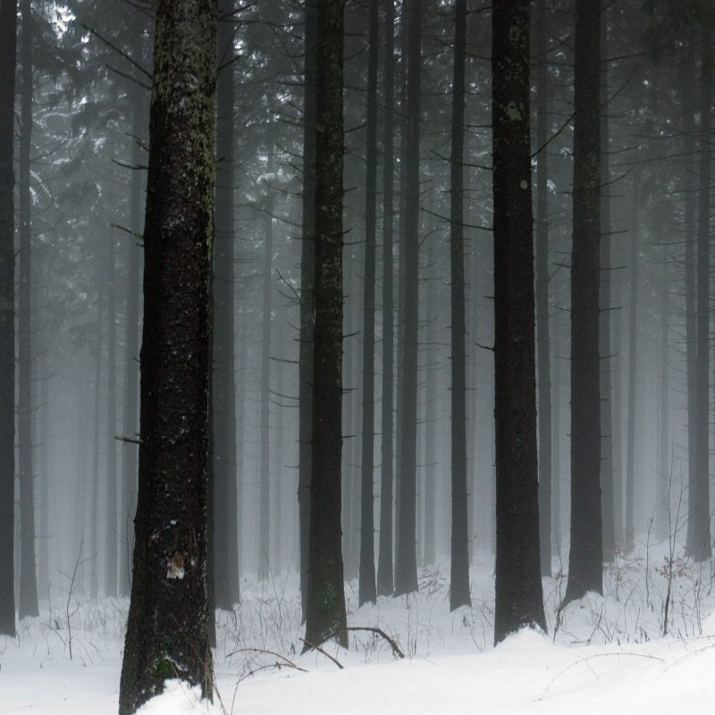 10 Best Snowy Dark Forest Wallpaper FULL HD 1080p For PC Background 2018 free download snowy forest wallpaper 2560x1600 1344 wallpaperup 800x800
