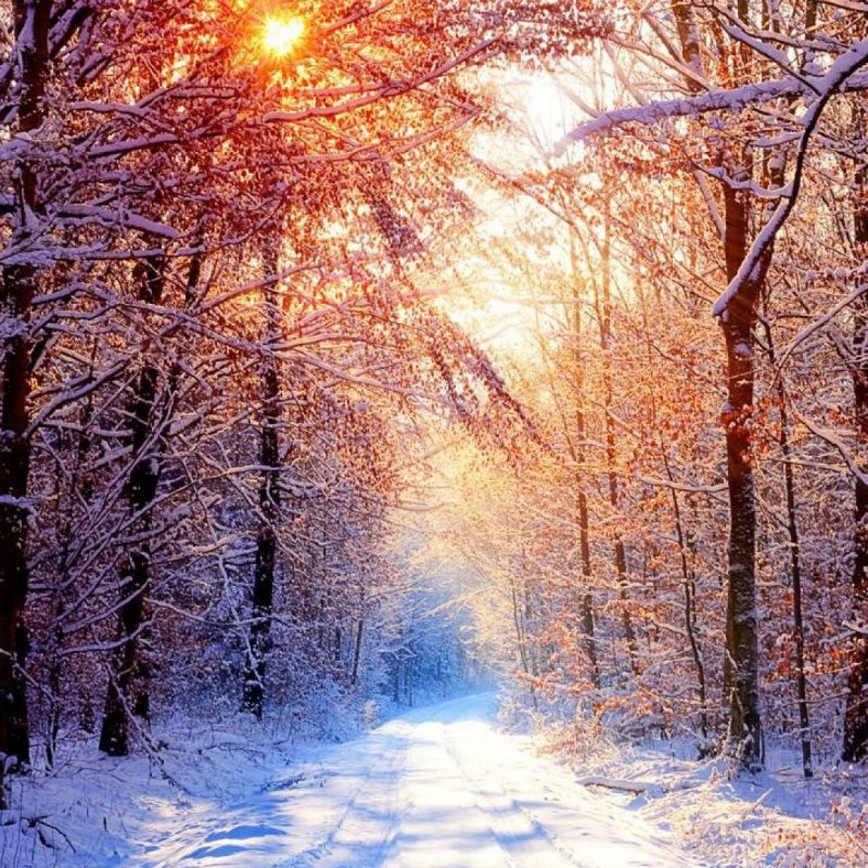 10 Latest Winter Forest Hd Wallpaper FULL HD 1920×1080 For PC Background 2020 free download snowy forest wallpapers wallpaper cave 1 800x800