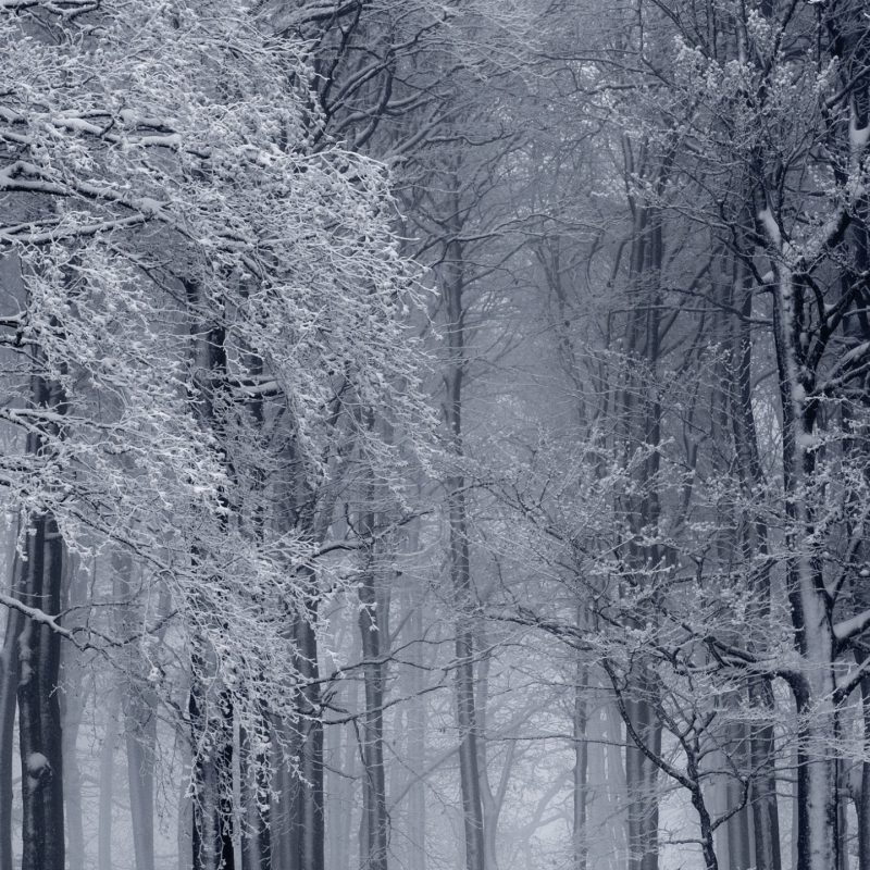 10 Latest Winter Forest Hd Wallpaper FULL HD 1920×1080 For PC Background 2020 free download snowy forest winter e29da4 4k hd desktop wallpaper for 4k ultra hd tv 800x800