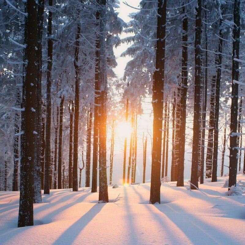 10 Latest Winter Forest Hd Wallpaper FULL HD 1920×1080 For PC Background 2020 free download snowy winter forest wallpaper wallpaper studio 10 tens of 800x800