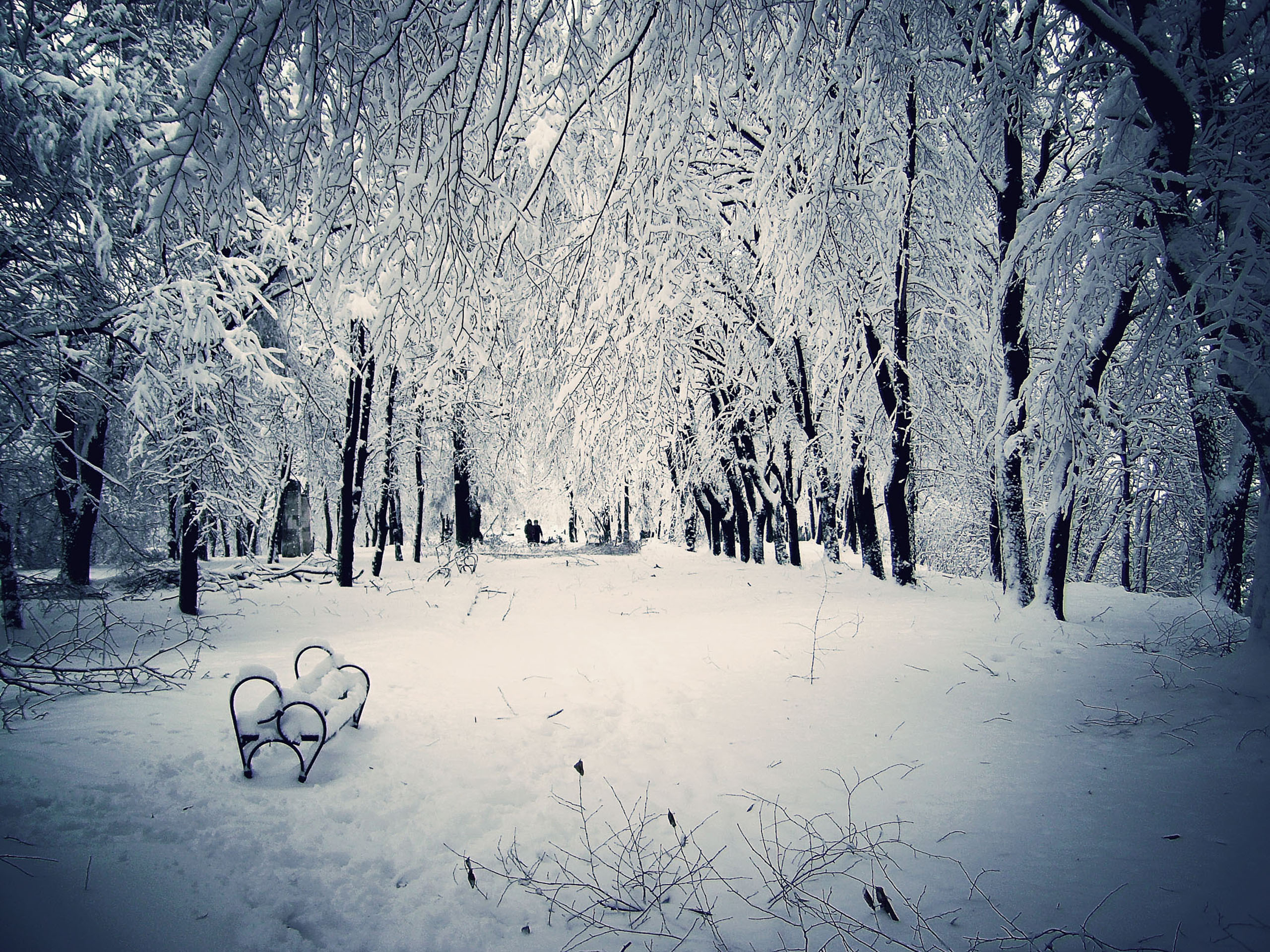 snowy winter scenes wallpaper - wallpapersafari