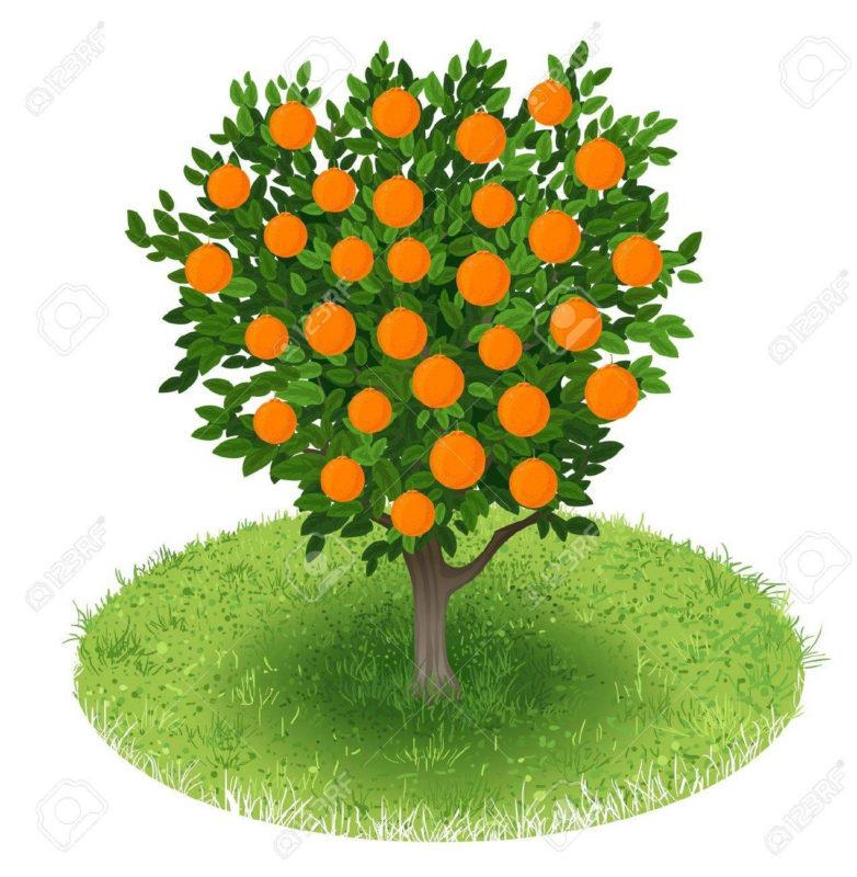 10 Best Orange Tree Pictures FULL HD 1080p For PC Background 2018 free download sommer orange tree mit orange fruchte im grunen bereich abbildung 782x800