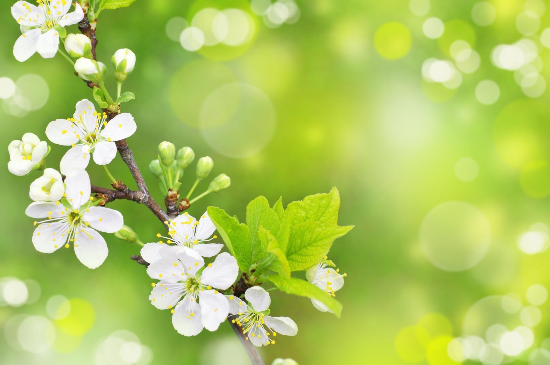 spring 16, free desktop wallpapers, cool wallpapers