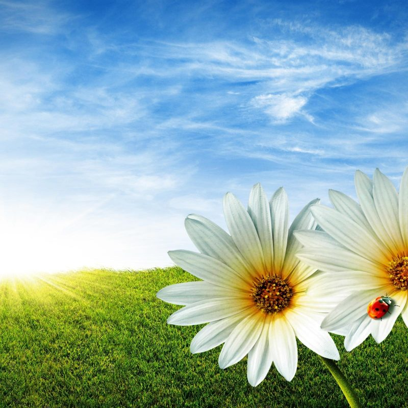 10 Best Free Spring Background Images FULL HD 1080p For PC Desktop 2018 free download spring background 19093 2560x1600 px hdwallsource 800x800