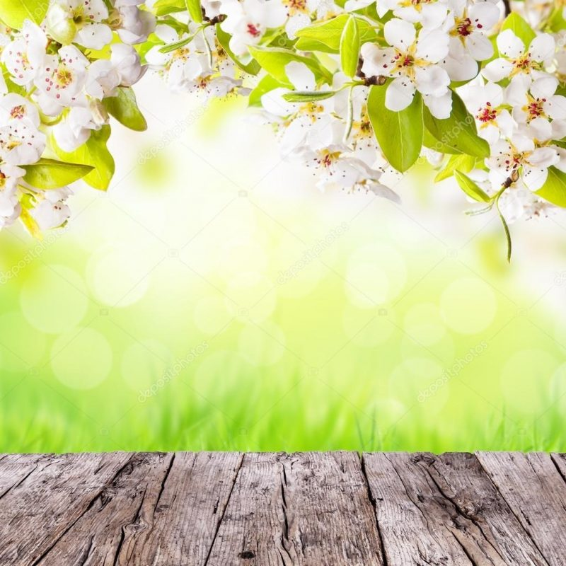 10 Best Free Spring Background Images FULL HD 1080p For PC Desktop 2018 free download spring background with free space for text stock photo jag cz 800x800