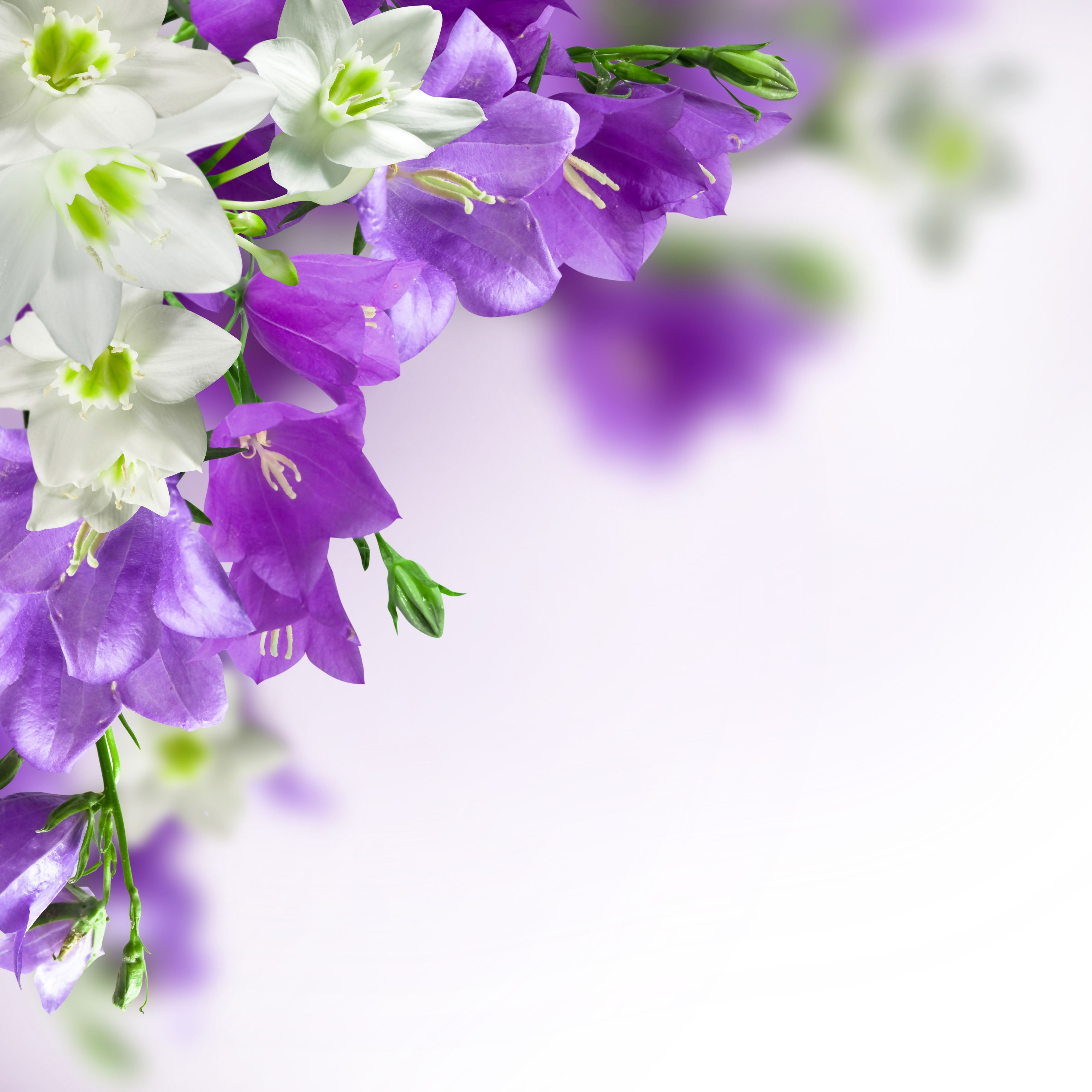 spring background with white and purple flowers | gallery