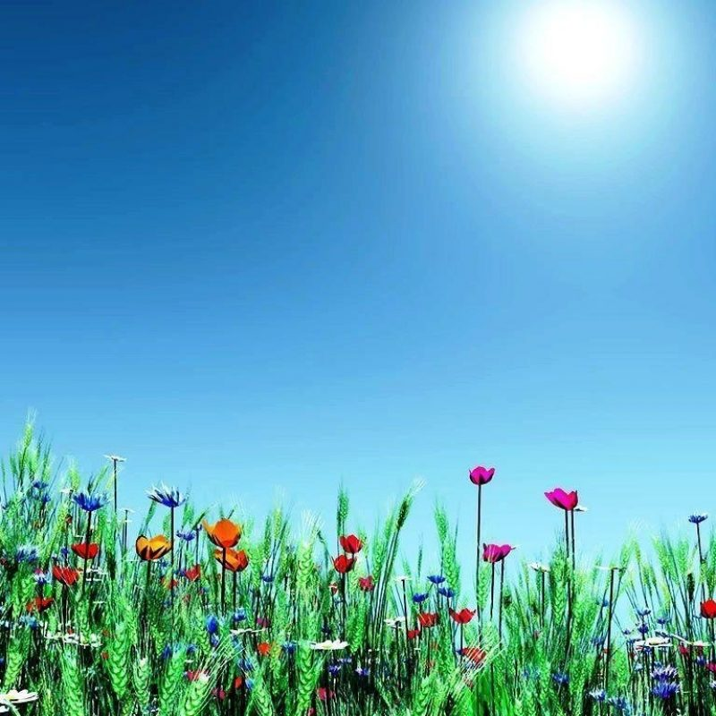 10 Best Free Spring Background Images FULL HD 1080p For PC Desktop 2018 free download spring backgrounds image free wallpaper cave 800x800