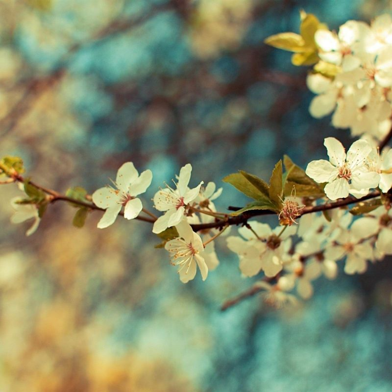 10 Top Beautiful Spring Desktop Backgrounds FULL HD 1080p For PC Desktop 2018 free download spring computer backgrounds c2b7e291a0 2 800x800