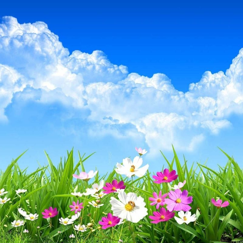 10 Top Background Images Nature Spring FULL HD 1080p For PC Background 2018 free download spring day wide desktop background wallpaper free nature spring 800x800