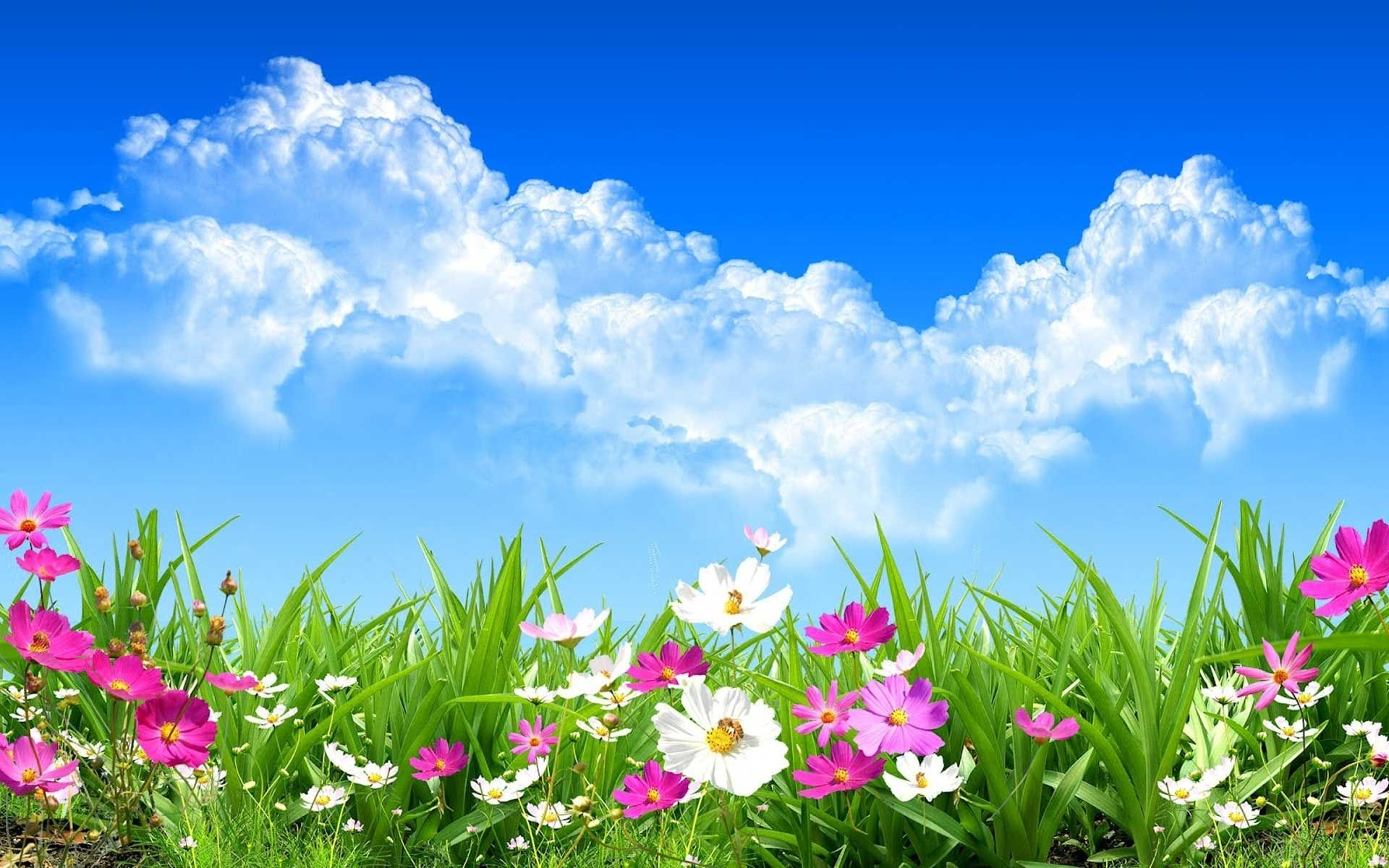 spring day wide desktop background wallpaper free | nature: spring