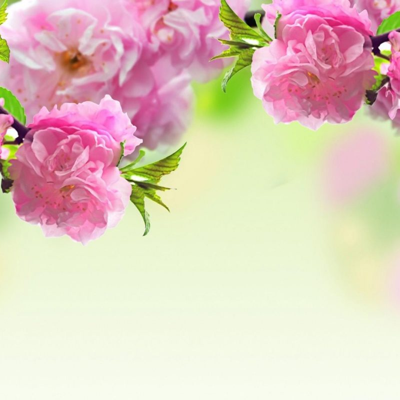 10 Best Springtime Wallpaper For Computer FULL HD 1920×1080 For PC Background 2020 free download spring desktop backgrounds images download new media file 800x800