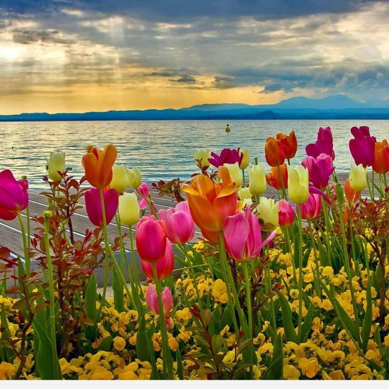 10 Top Spring Desktop Wallpapers FULL HD 1080p For PC Desktop 2018 free download spring desktop wallpapers backgrounds desktop wallpapers 800x800