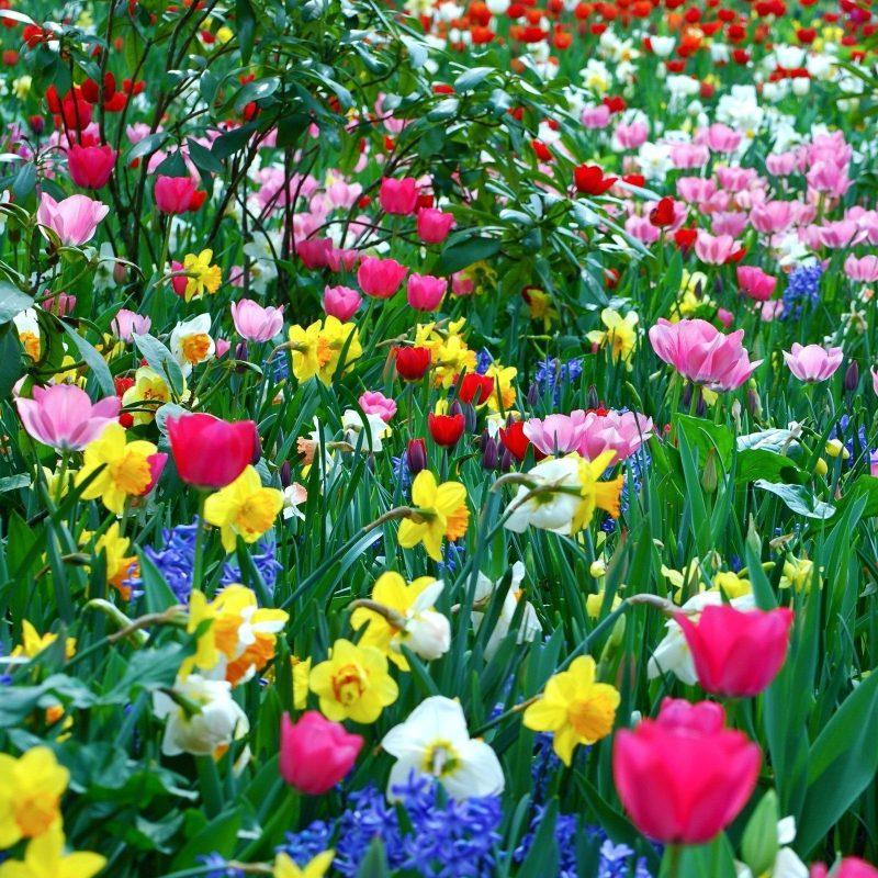 10 New Spring Flowers Background Desktop FULL HD 1920×1080 For PC Desktop 2018 free download spring desktop wallpapers widescreen group 74 800x800