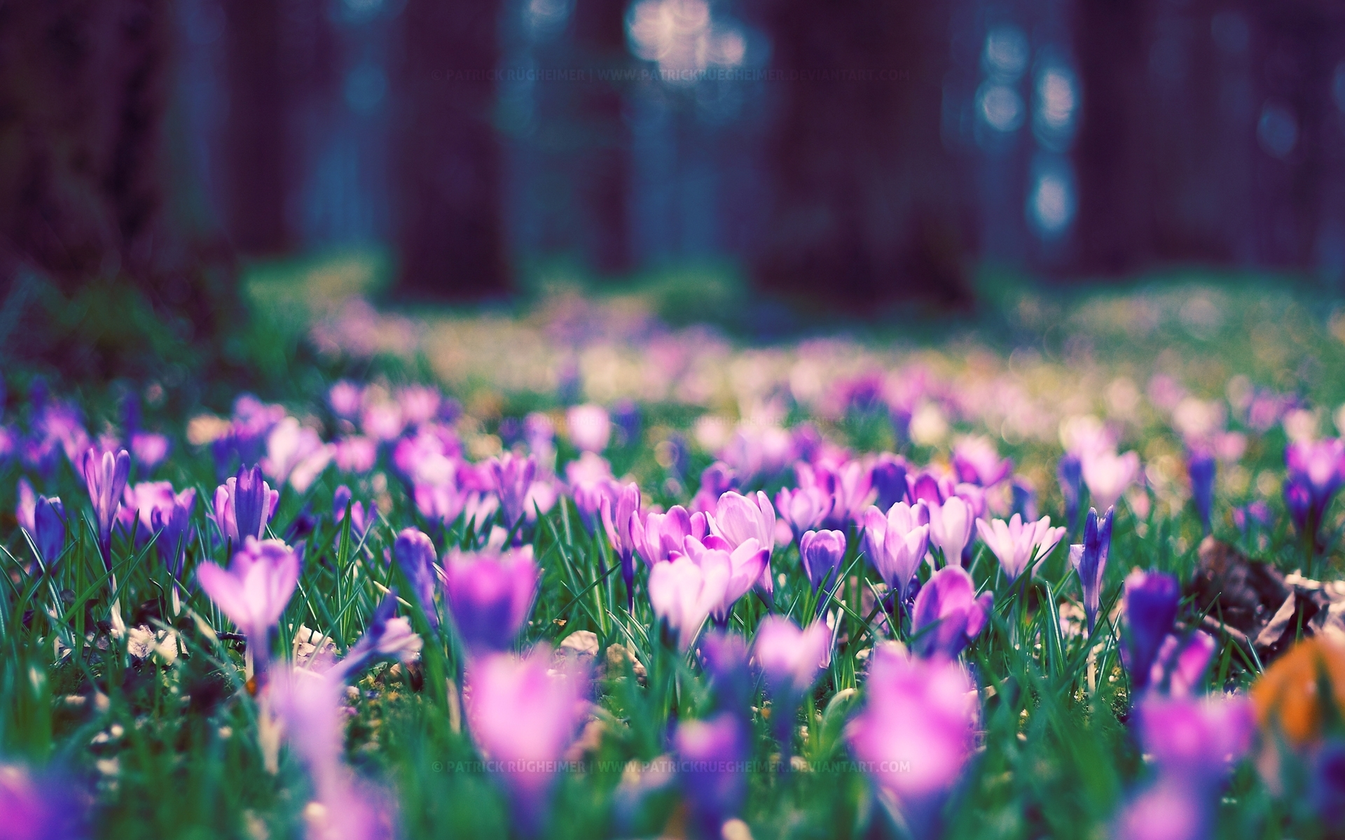 spring flower park wallpapers | hd wallpapers | id #12434