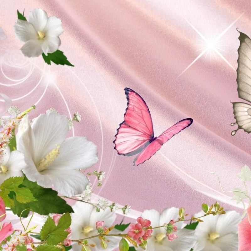 10 Latest Flowers And Butterflies Wallpaper FULL HD 1080p For PC Desktop 2020 free download spring flowers and butterflies shiinamomo nature pinterest 800x800