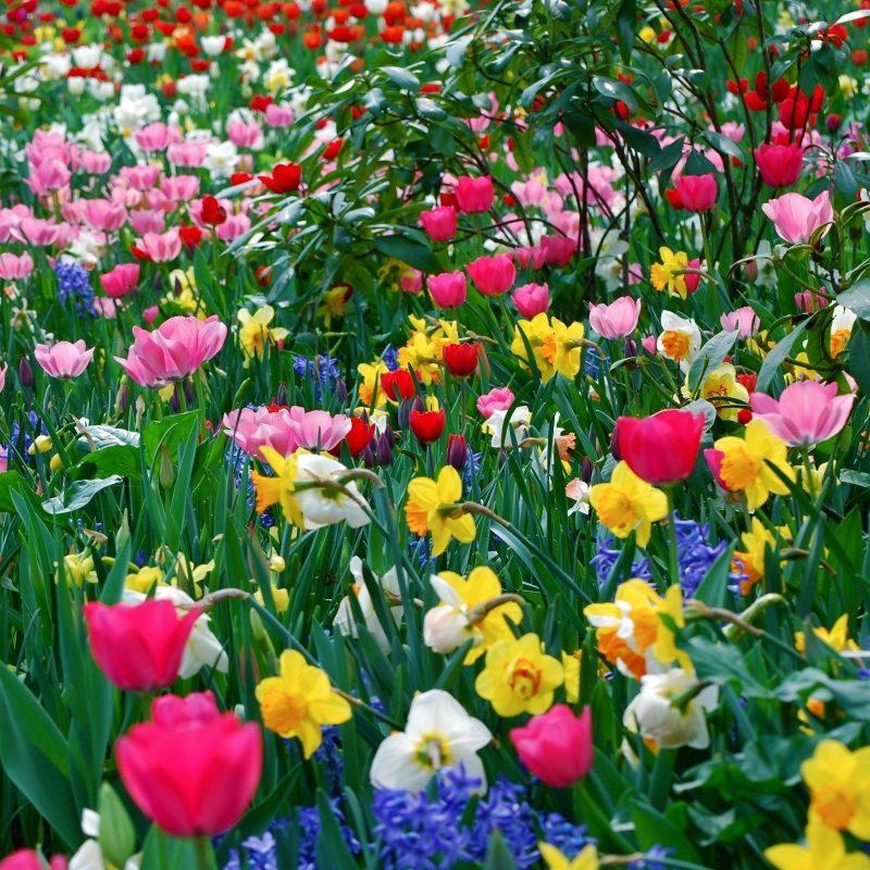 10 Top Spring Flowers Wallpaper Hd Full Hd 1080p For Pc Desktop 2018