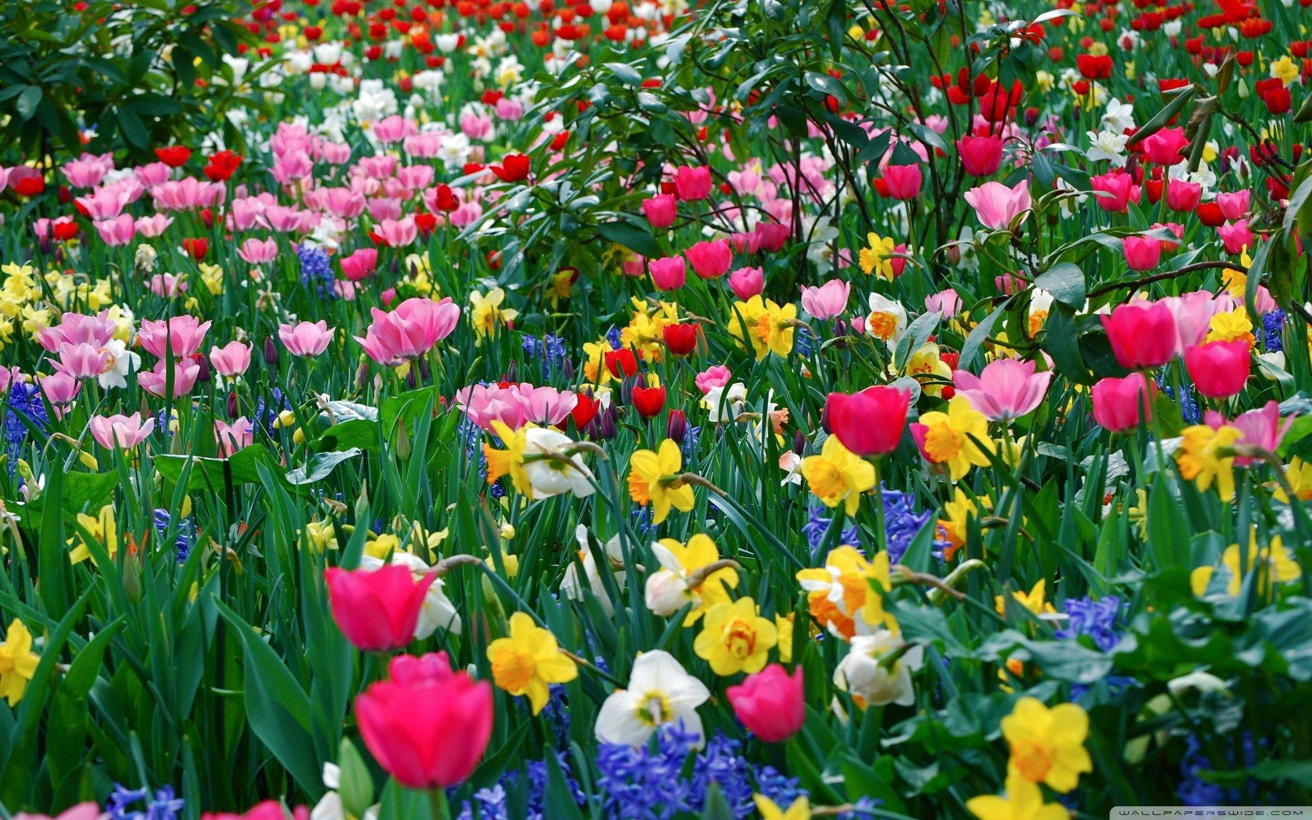 spring flowers background   spring flowers wallpaper hd desktop