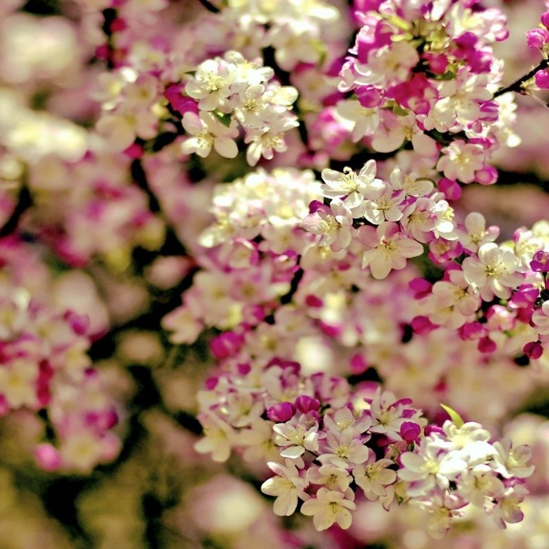 10 Most Popular Pictures Of Spring Flowers For Wallpaper FULL HD 1080p For PC Desktop 2020 free download spring flowers background wallpaper spring tree flowers categories 800x800