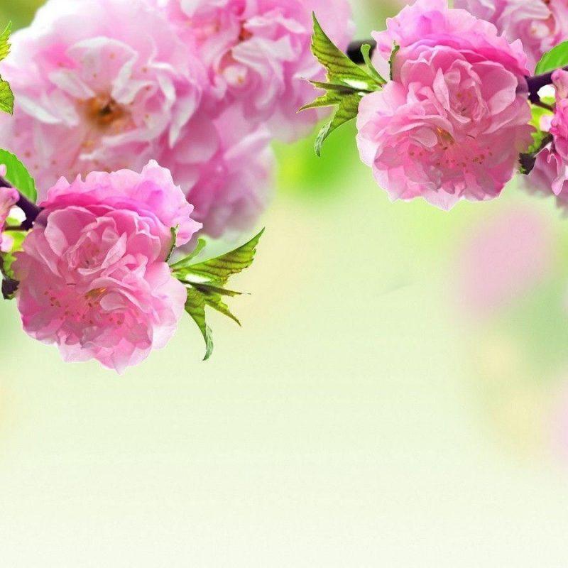 10 New Spring Flowers Background Desktop FULL HD 1920×1080 For PC Desktop 2018 free download spring flowers backgrounds desktop wallpaper cave 1 800x800
